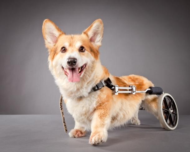 hunde mit handicap fotoserie von carli davidson hunde. Black Bedroom Furniture Sets. Home Design Ideas