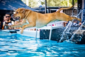 Hund  beim Dog Diving