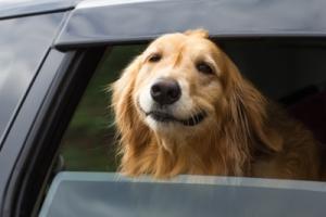 italien einreise mit hund