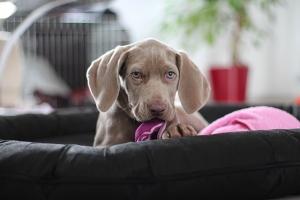 Hundehaare In Der Wohnung Hunde Ratgeber
