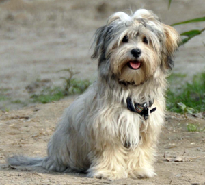 leicht erziehbarer hund