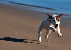 Badeurlaub mit dem hund hunde ratgeber for Urlaub auf juist mit hund